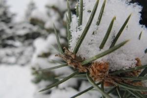 колючки в сніжинках