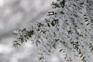 сніг-сніжок