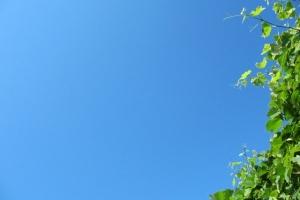 літнього дня