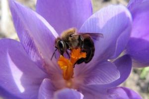 у пошуках меду