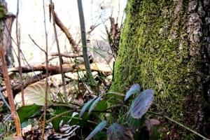 лісова композиція