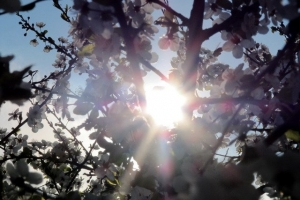 у променях сонця