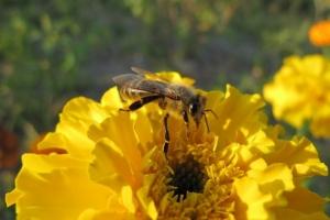 мед люблять усі
