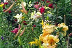 квітковий хаос
