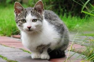 То – кіт