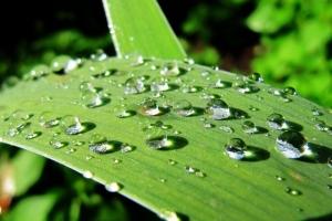 після дощу