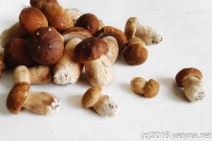 білі грибочки
