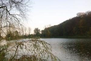 верба восени