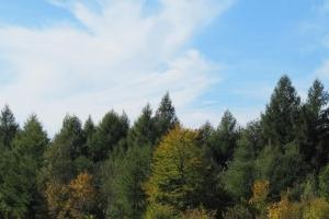 ліс здалека