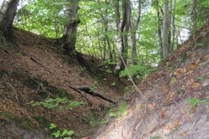 яр у лісі
