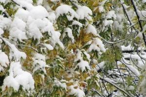 під снігом