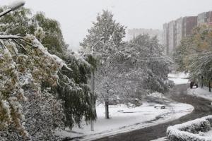 під сніговою ковдрою