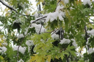 сніг усюди