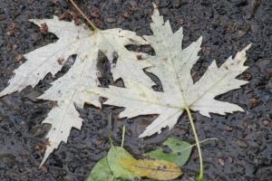 опало листя