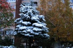 ялинка як взимку