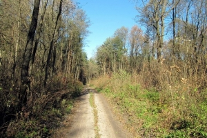 лісовими стежками