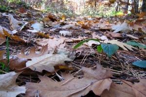 опале листя