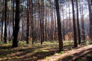 у лісі