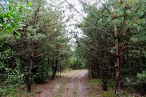 лісовими стежинами
