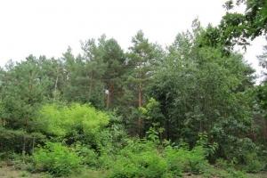 Лісова галявина